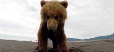 2015 legjobb GoPro felvételei