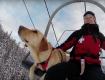 Mentő kutyák akcióban